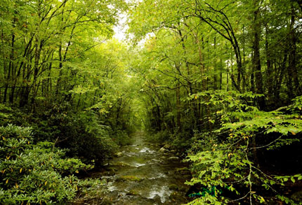Hutan-Tropika-Indonesia.
