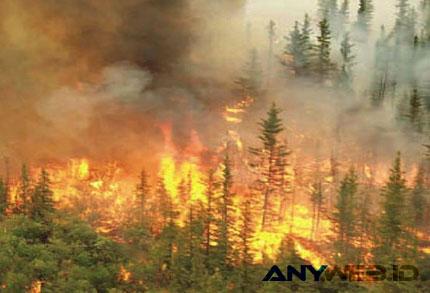 Kebakaran Hutan - www.satuharapan.com