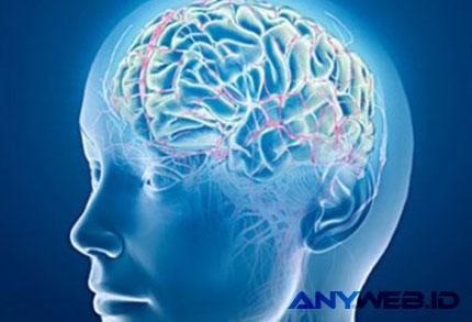 Otak Manusia - bigthink.com