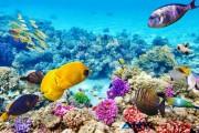 "Great Barrier Reef, Ekosistem Terumbu Karang Terbesar di Dunia yang ""Telah Mati"""