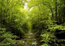 Manfaat Hutan Secara Ekonomi