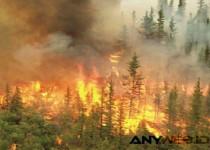 Perubahan Iklim Picu Maraknya Kebakaran Hutan