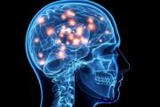 Mengejutkan! Berdasarkan Hasil Penelitian, Otak Manusia Membangun Strukturnya Dalam 11 Dimensi