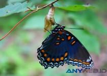 Pengertian dan Faktor Pendorong Evolusi