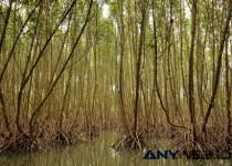 Manfaat Hutan Mangrove Untuk Ikan Laut