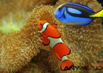 """Kesuksesan Film """"Finding Dory"""" Justru Mengancam Populasi Ikan Blue Tangs"""