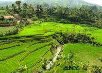 Apa Saja Keunggulan Tanah di Indonesia?